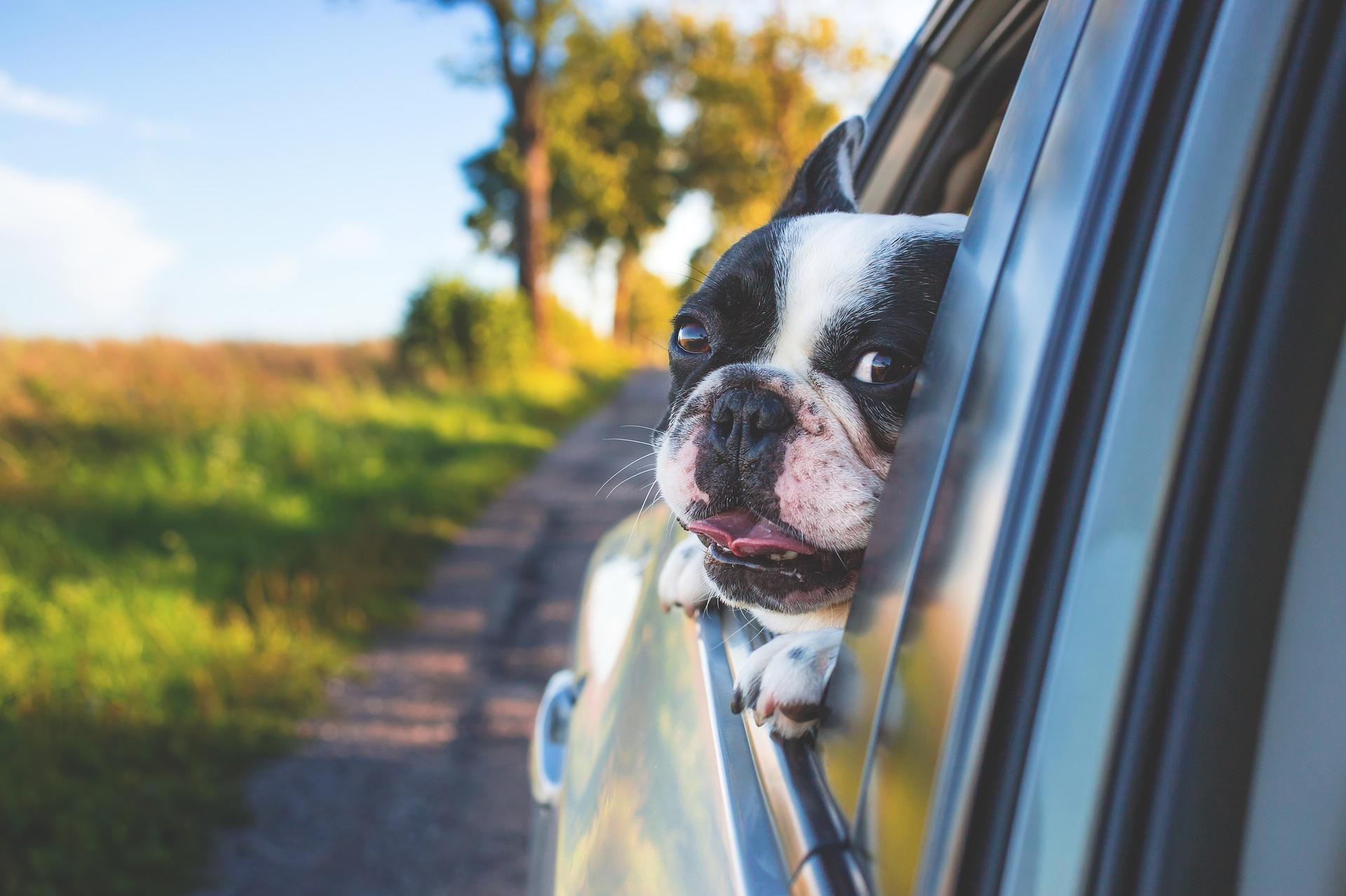 dog g3f6732ec0 1920 - Los beneficios de cuidar de mascotas para alcanzar el bienestar
