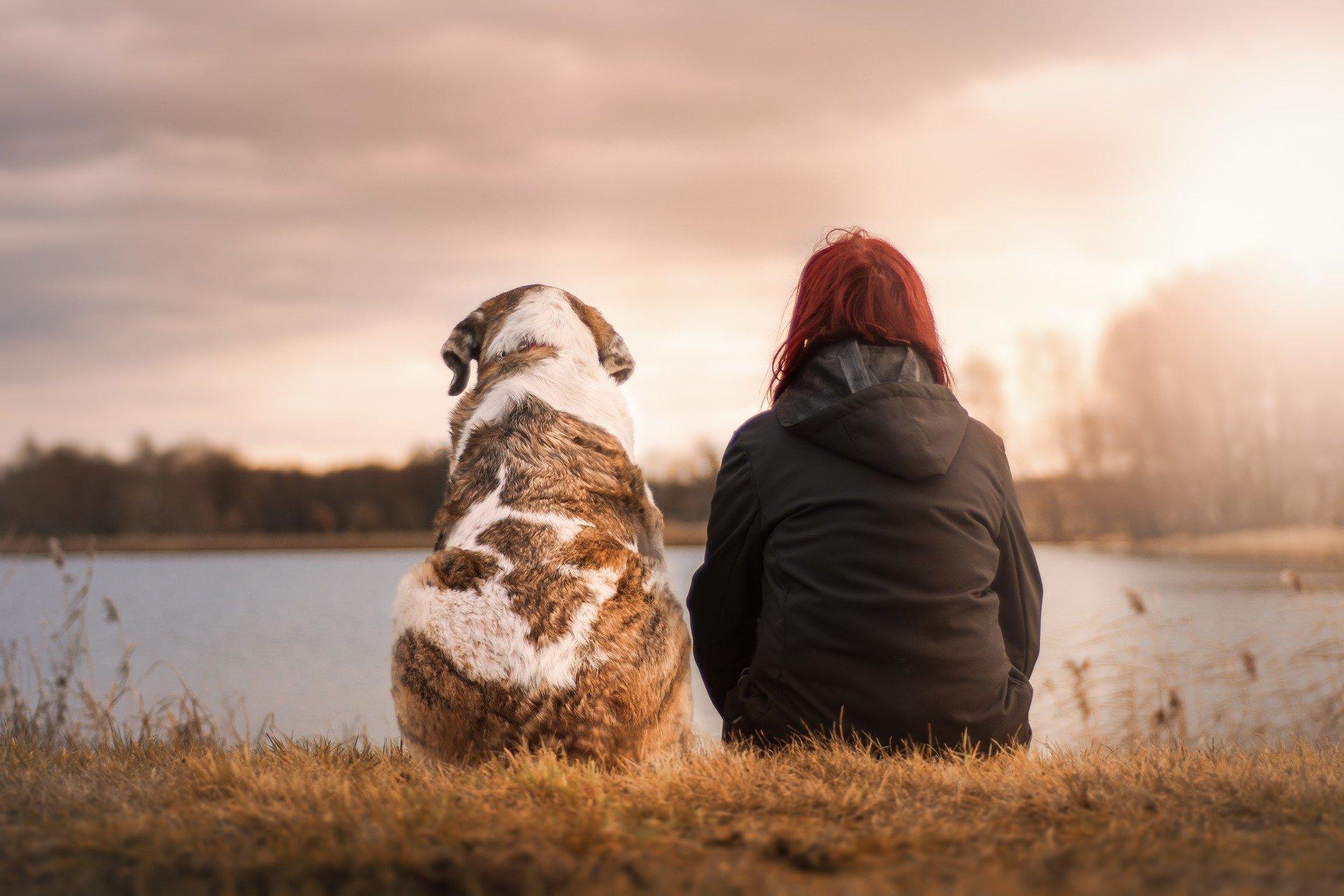 friends g96e5f4442 1920 - Los beneficios de cuidar de mascotas para alcanzar el bienestar