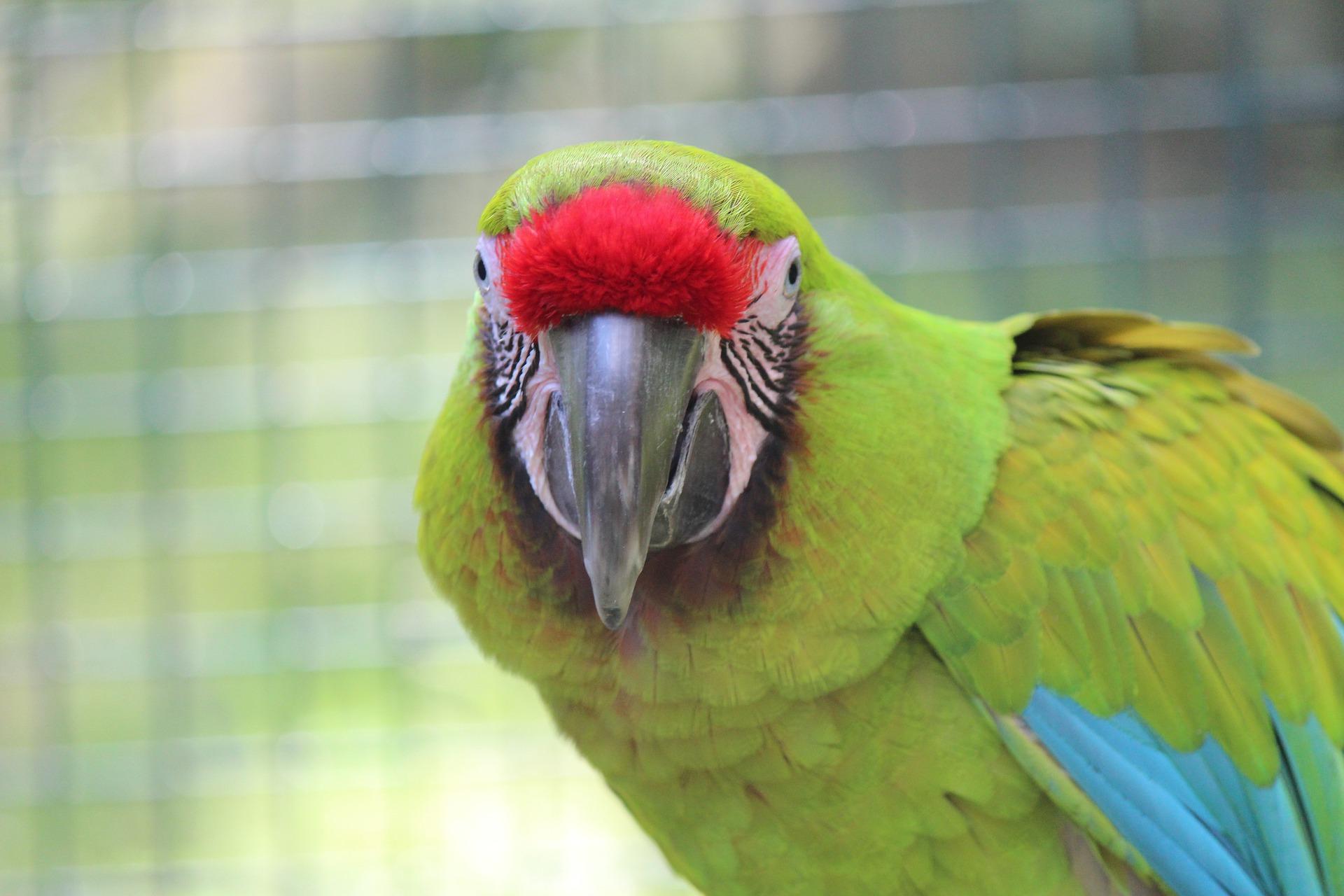 macaw 5635801 19201 - Guacamayas que adornan el cielo de Caracas